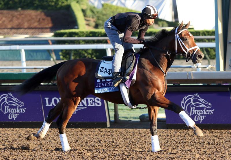 Theory (Cecilia Gustavsson/Horsephotos.com)