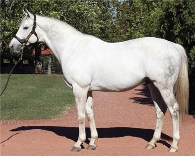 Tapit Gainesway Farm