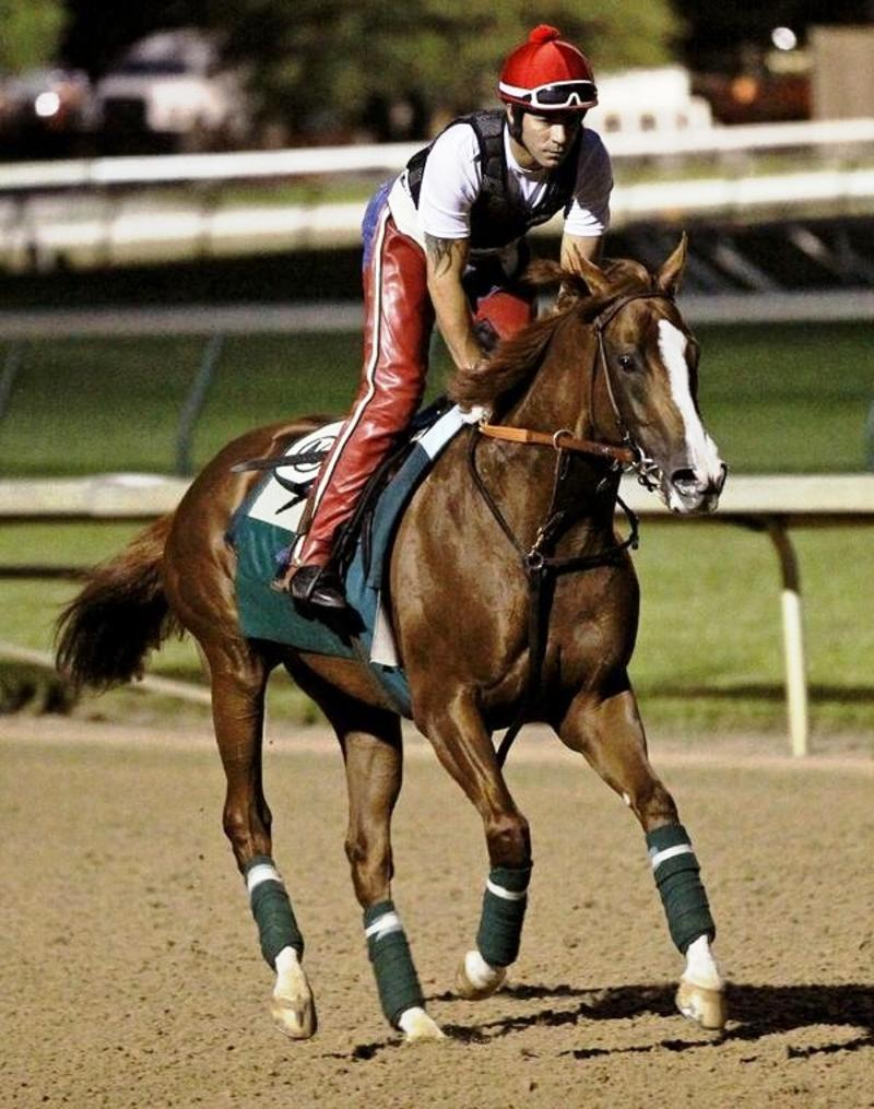 California Chrome (Churchill Downs/Reed Palmer Photography)