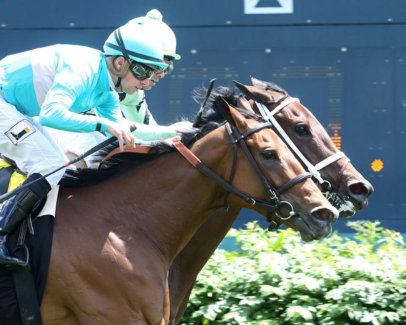 ROCA-ROJO---The-Churchill-Distaff-Turf-Mile-Gr-ll---The-32nd-Running---05-06-17---R07---CD---Finish-Tight