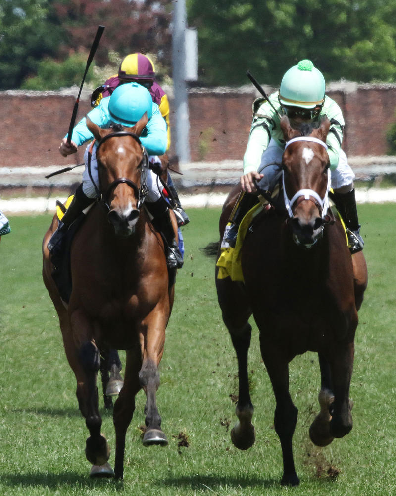 ROCA-ROJO---The-Churchill-Distaff-Turf-Mile-Gr-ll---The-32nd-Running---05-06-17---R07---CD---Head-On-2