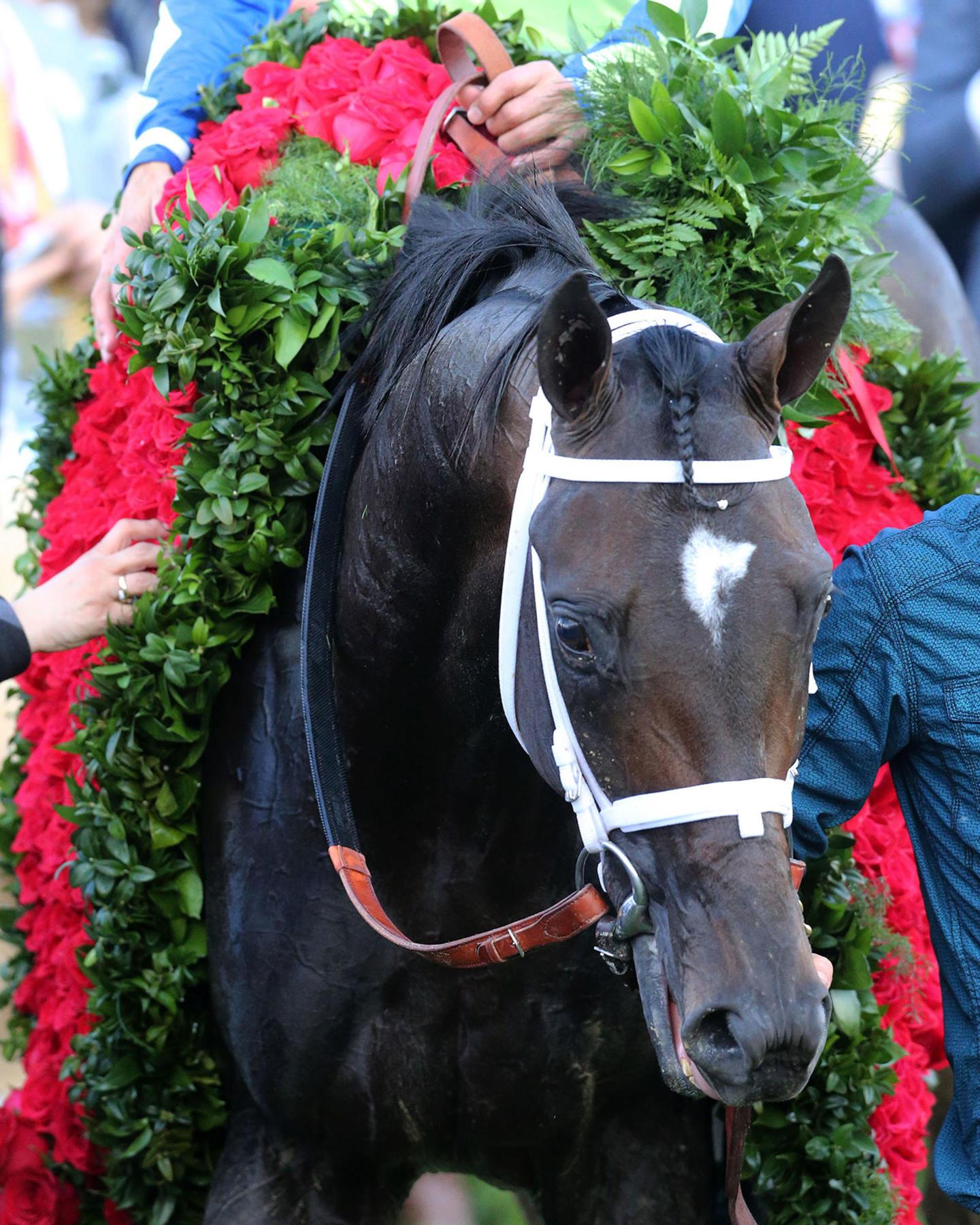 ALWAYS-DREAMING----The-Kentucky-Derby-Gr-1---143rd-Running---05-06-17---R12---CD---Head-Shot---Horse-1