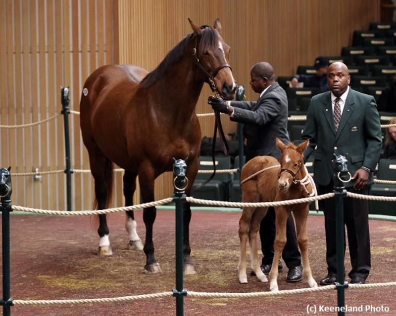 Keeneland January Sale (c) Keeneland Photo