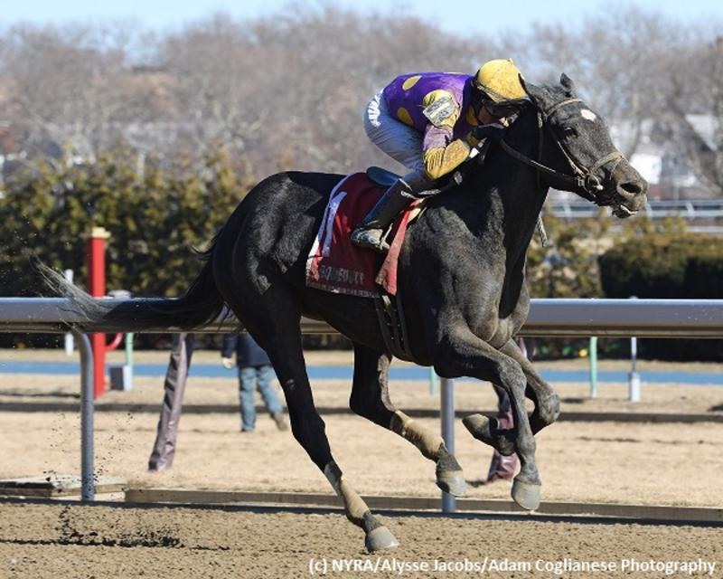 Midnight Disguise (NYRA/Alysse Jacobs/Adam Coglianese Photography)