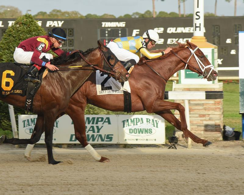 Flameaway wins the Sam F Davis Stakes