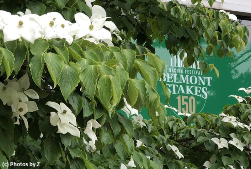 Belmont Park (c) Photos by Z