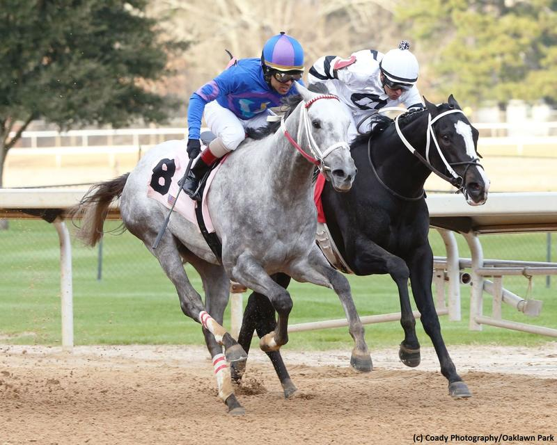 Gray Attempt and Long Range Toddy (c) Coady Photography/Oaklawn…