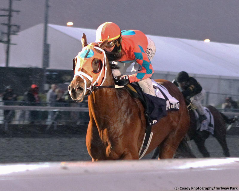 Somelikeithotbrown (c) Coady Photography/Turfway Park