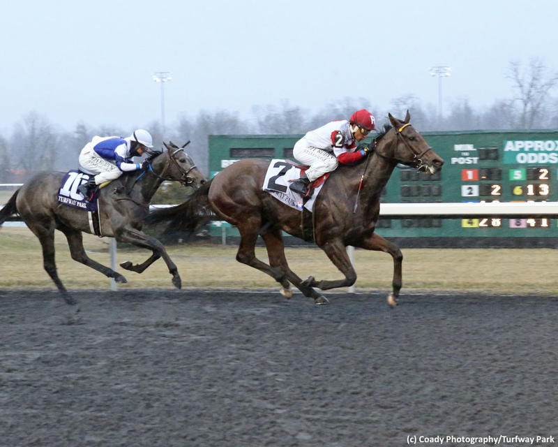 Naughty Joker (c) Coady Photography/Turfway Park