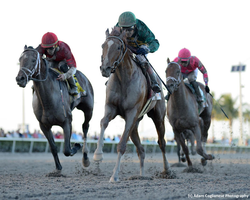 Code of Honor (right) and Bourbon War (left) (c) Adam Coglianese…