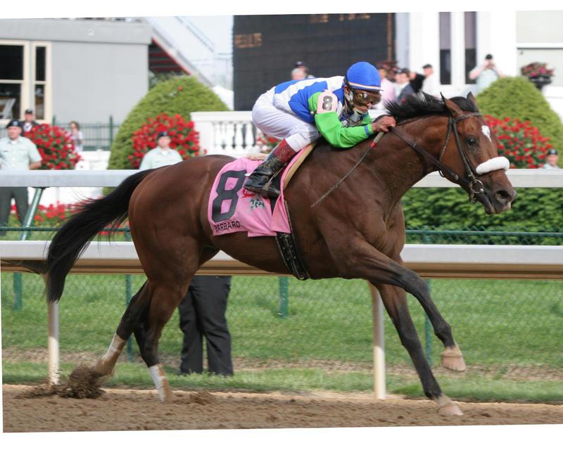 20060506 Barbaro (finish) (2)