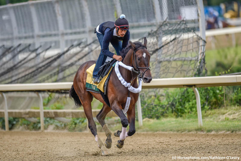 Tax (c) Horsephotos.com/Kathleen O'Leary
