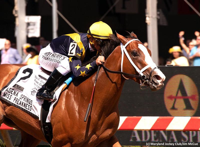 Covfefe (c) Maryland Jockey Club/Jim McCue