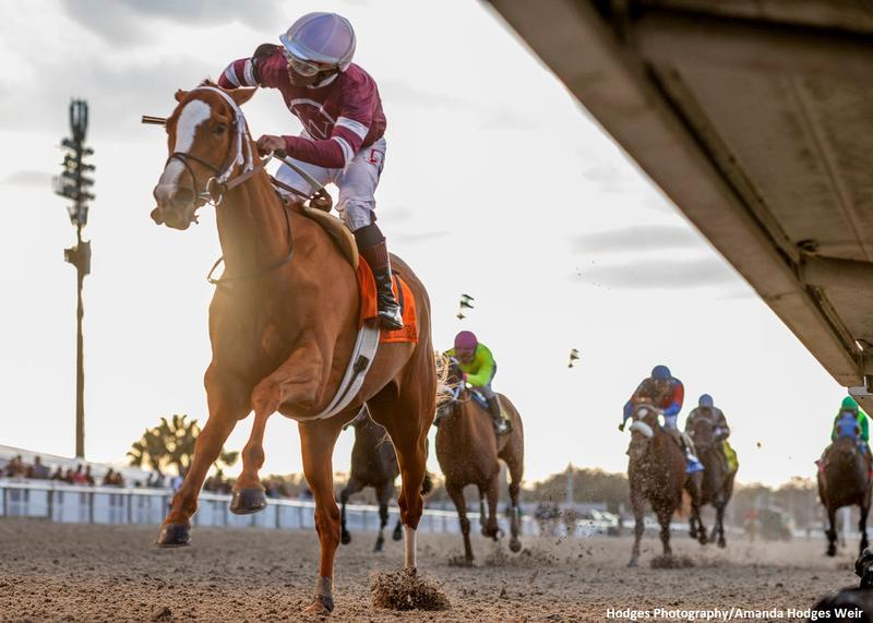 2/15/2020 - Finite and jockey Ricardo Sanrtana, Jr. pull…
