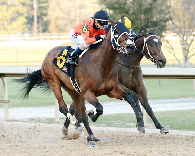 ?Marquee Miss (Oaklawn Park/Coady Photography)