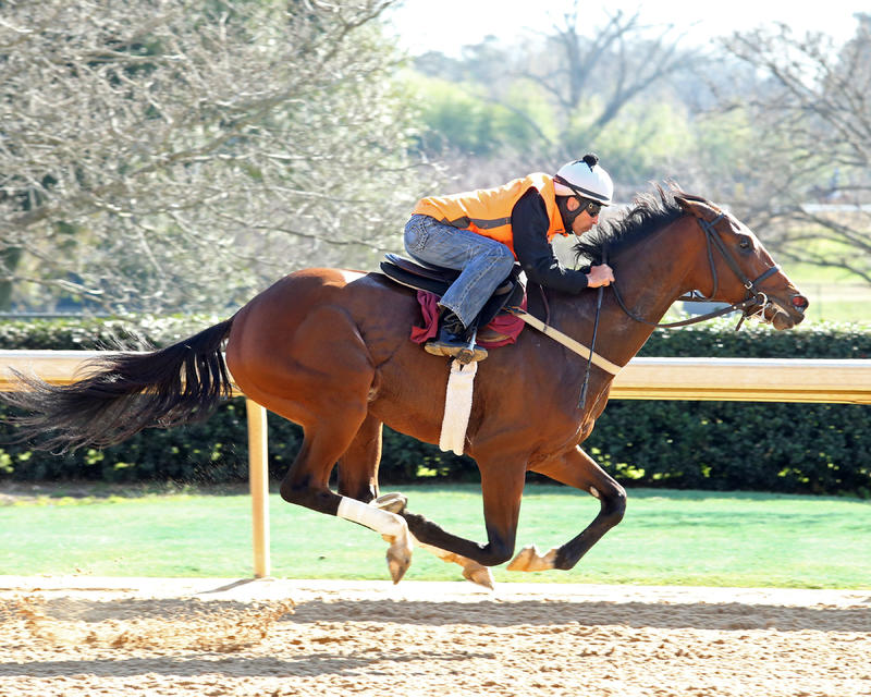 20160305 Suddenbreakingnews OP Work (Coady Photography)2
