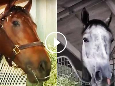 Kentucky Derby 2016: Ep. 7 - East vs West