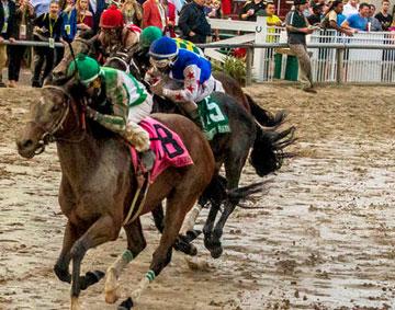 Guest Suite, Mo Town headline 14-horse Risen Star