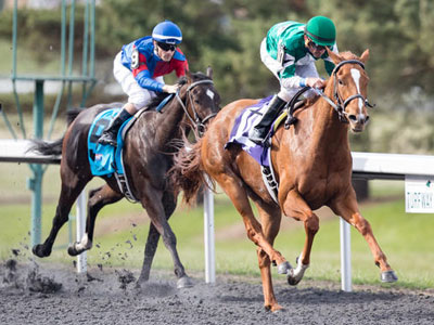 Purely a Dream prevails in Bourbonette Oaks
