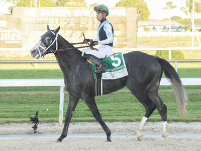 Tapwrit nets century-topping BRIS Speed rating for Tampa Bay Derby win